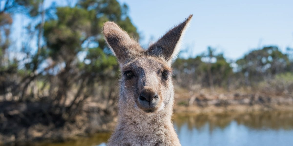 Are you are Resident or Non-Resident for Australian Tax Purposes | Glint Accountants